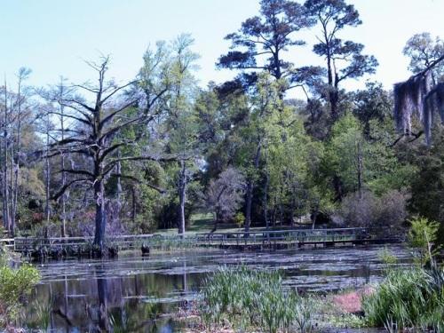 Ortoncypressswamp